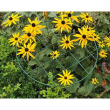 Grid Grow Through Support for Rudbeckia Hirta